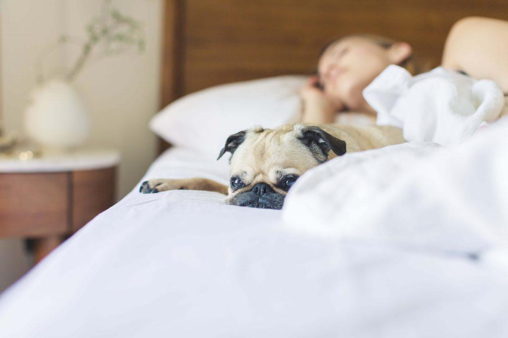 Bien dormir pour se protéger des maladies à l'image de cette femme qui dort profondément dans son lit. Son petit chien qui est à ses côtés n'arrive pas à trouver le sommeil.
