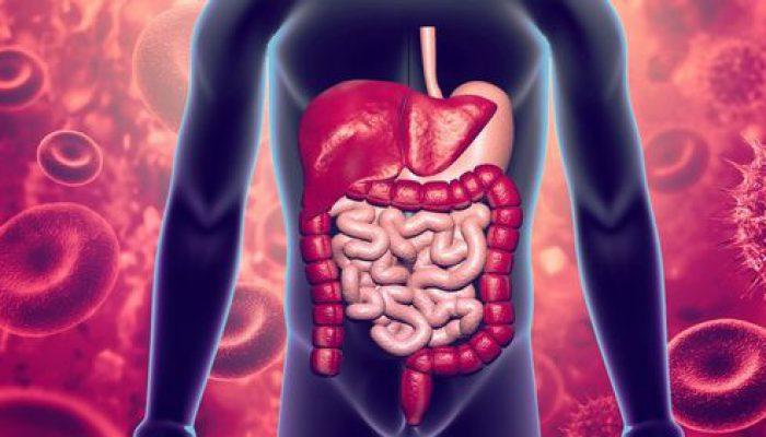 L'inflammation des intestins